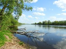 River Atmata in spring, Lithuania stock photo