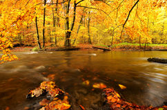 River autumn Stock Images