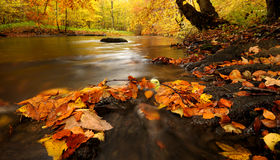 River autumn Stock Photography