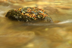 River in autumn. White River in autumn in Bulgarian mountains Stock Images
