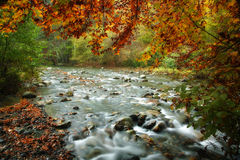 River in autumn Stock Images