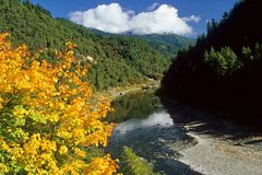 River in Autumn. River with colorful tree in foreground Stock Images