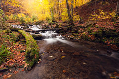 River in autumn colors forest Royalty Free Stock Photography