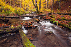 River in autumn colors forest Royalty Free Stock Photos