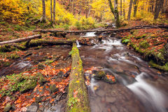 River in autumn colors forest Royalty Free Stock Image