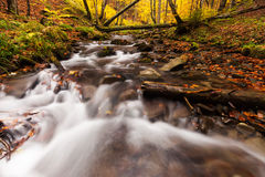 River in autumn colors forest Stock Photo