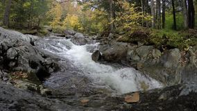 River with autumn colors stock video footage