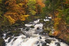 River through autumn colours in Scotland stock image