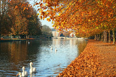 River in Autumn or fall. Landscape of Golden leaves. Royalty Free Stock Photos