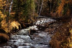 River in autumn forest Stock Photos