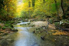 River in autumn forest Stock Image