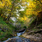 River and autumn forest Royalty Free Stock Images