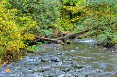 River in autumn forest Royalty Free Stock Photo