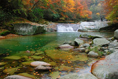 River in autumn forest. Scenic view of river flowering through colorful autumn forest Stock Images