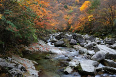 River in autumn forest. Scenic view of river flowing past rocks in autumn forest Royalty Free Stock Photo