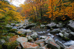 River and autumn forest. Picturesque view of river flowering over rocks in beautiful autumn forest Stock Photos