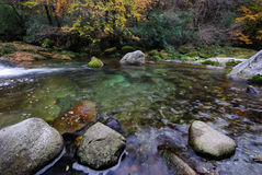 River in autumn forest. Scenic view of river in autumn forest with rocks in foreground Royalty Free Stock Images