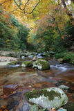 River in autumn forest. Scenic view of rocky river in leafy autumn forest Stock Photos