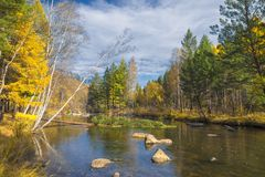River in the autumn forest. Alaska. Royalty Free Stock Photography