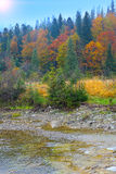 River in autumn forest. Colored wood Royalty Free Stock Photos