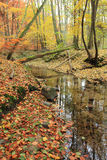 River in autumn forest Royalty Free Stock Image