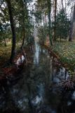 River in autumn forest. Nature composition. royalty free stock images