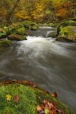 River through autumn forest stock images