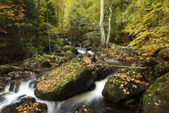 River in autumn forest. Scenic view of river flowing through autumn forest with leaves on rocks in foreground Stock Photo