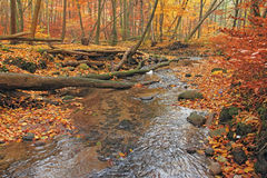 River in autumn forest Stock Images