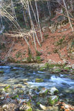 River among autumn landscapes. Beautiful rapid river with mossy stones flowing through autumn forest Stock Images