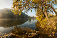 River with autumn leaves Royalty Free Stock Photo