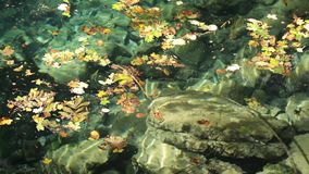 River in autumn  with nature sounds stock footage