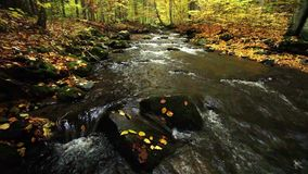 River in autumn with nature sounds. Mountain river in autumn in forest with nature sounds stock video