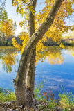River in autumn with reflections Royalty Free Stock Images