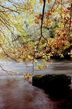 River autumn trees Royalty Free Stock Photo