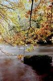 River autumn trees Royalty Free Stock Photo