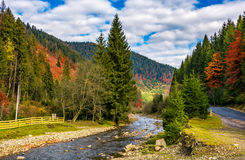 River in autumnal countryside with spruce forest Stock Photos