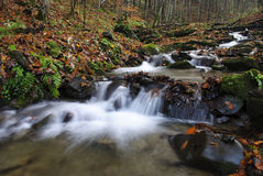 River in autumnal forest Royalty Free Stock Photography