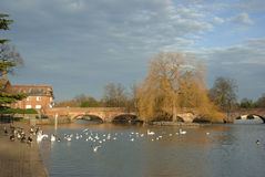 River avon Royalty Free Stock Photography