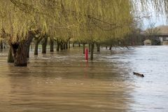 View by Lucy`s Mill of flooding in Stratford upon Avon Warwickshire with bridge in background stock photo
