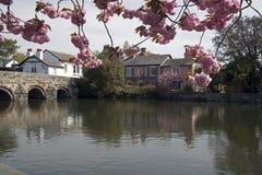 River Avon Christchurch Dorset. Riverside Scene at Christchurch in Dorset Royalty Free Stock Photos