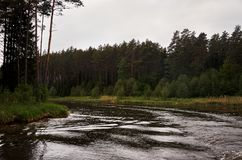 A river in the background of a forest. Green trees. Royalty Free Stock Photos