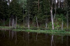A river in the background of a forest. Royalty Free Stock Image