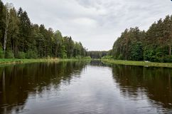 A river in the background of a forest. Royalty Free Stock Images