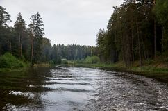 A river in the background of a forest. Royalty Free Stock Photo