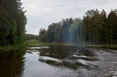 A river in the background of a forest. Stock Image