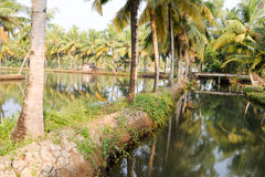 River of the backwaters at Kollam Royalty Free Stock Photo