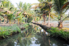 River of the backwaters at Kollam Stock Photos
