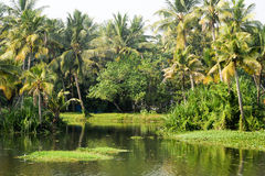 River on the backwaters the way from Kollam to Alleppey Stock Images