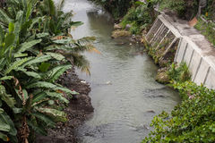 A river with banana tree leaf on the side photo in jogja indonesia. Java Royalty Free Stock Photo